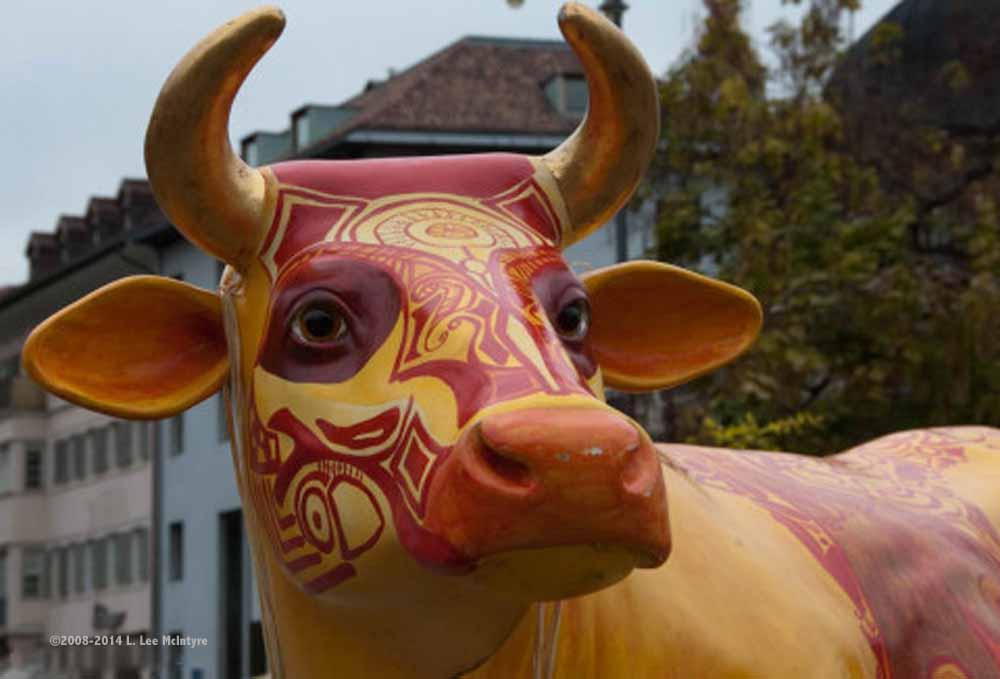 Closeup of the fiberglass cow, fall festival, Bolzano
